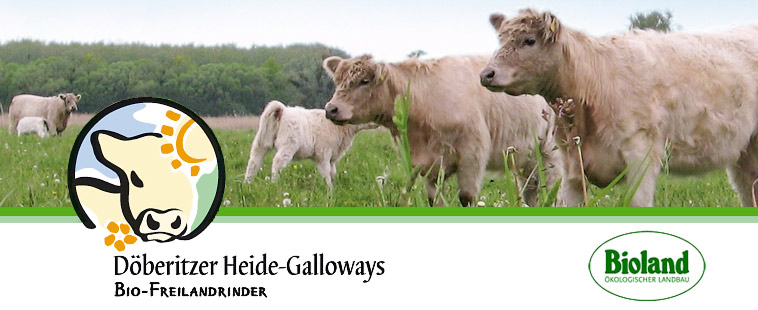Döberitzer Heide-Galloways
